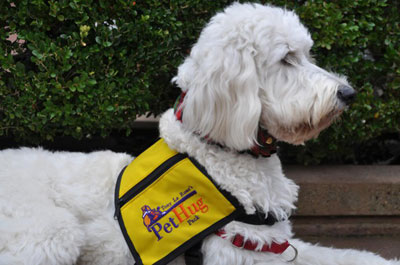 Service, Therapy, Companion and Donated Dogs by Goldendoodle Puppies
