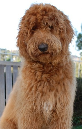 Big dildo ebony