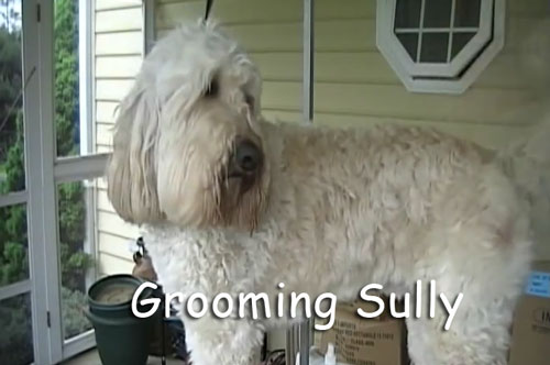 Sully Getting Groomed