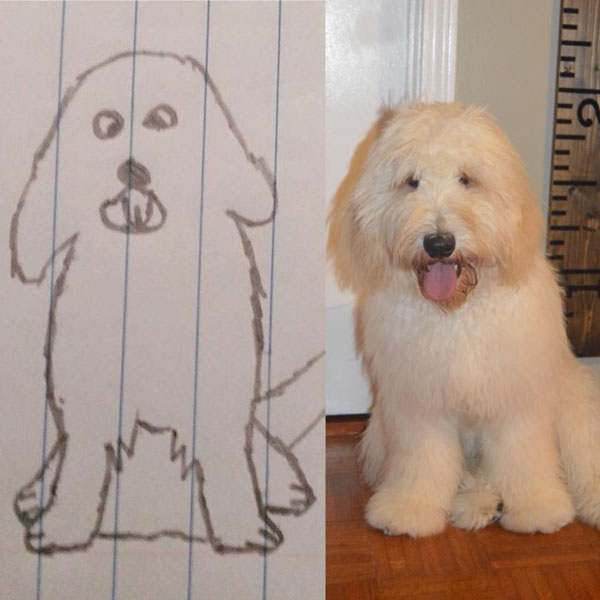 Testimonials and Reviews of Goldendoodle Puppies by Moss Creek