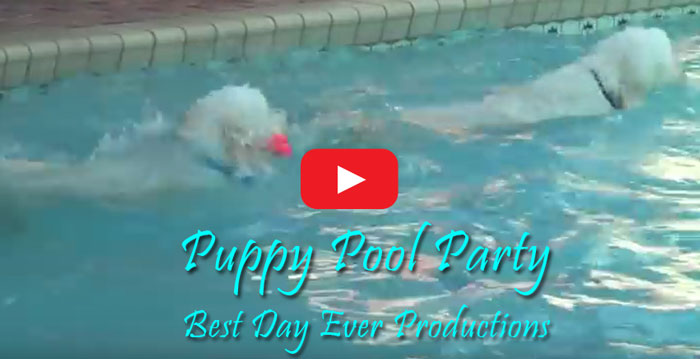 Moss Creek Goldendoodles Puppy Pool Party Video